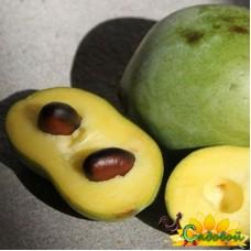 Азимина трёхлопастная (банановое дерево)  Золото Ребекки