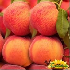Персик  Златогор