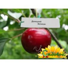 вишня обыкновенная, или вишня садовая  Донецкий великан